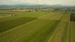 Aerial Perspective Over Hop Field Stock Footage