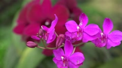 Pink Flowers, Flowering Plants, Nature Stock Footage