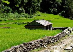 Rice fields and village. Himalayan landscape Stock Photos
