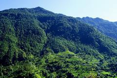 Beautiful himalayan forest landscape, trek to Annapurna Base Cam - stock photo