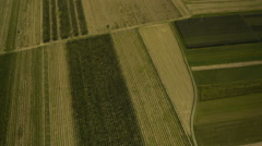 High Up Tilt-up view of Hop Field Stock Footage