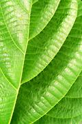 Green plant leave, detail Stock Photos