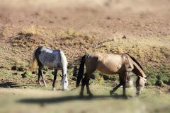 Andalusian horses on pasture Stock Photos
