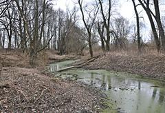 Floodplain forest - stream - stock photo
