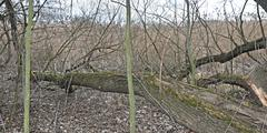 Floodplain forest - stock photo