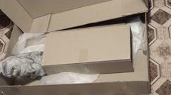 Hiding in carton box british cat Stock Footage