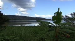 Jungle panama - stock footage