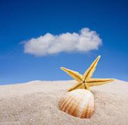 Starfish on the beach Stock Photos