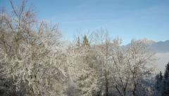 Aerial HD: Vertical Lift over Frozen Trees Stock Footage
