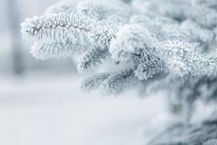 Winter background with frosty fir branches Stock Photos