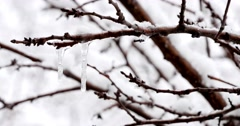 Frozen Icicles On The Branch 4k - stock footage