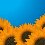 Sunflowers over blue - stock illustration