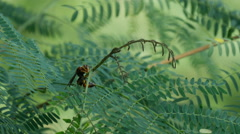 Big bee at a plant in Luang Prabang, Laos Stock Footage