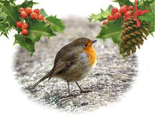 robin on frosty ground - stock illustration