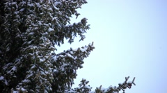 Magpie bird sitting on a tree during snowfall in winter. HD. 1920x1080 Stock Footage