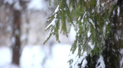 Snow covered tree branch in winter time. Christmas background with changes focus Stock Footage