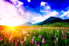 Sunset in a flowery meadow Stock Photos