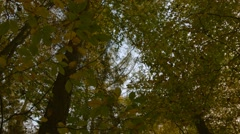 Leaves falling in autumn Stock Footage