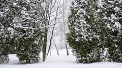 Snow falling on green thuja trees background with people far off Stock Footage