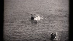Family estate in the depression, guardian dog swimming Stock Footage
