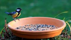 Tit pecks fodder from feeding place Stock Footage