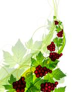 Red grapes Stock Illustration