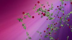 Falling red roses loop, on pink backgound. Valentines Day, weddings, romance. Stock Footage