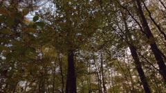 Pan along tree crowns Stock Footage