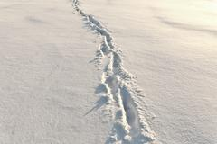 Footsteps on the snow Stock Photos