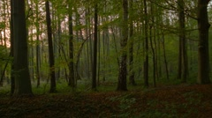 A slow pan in the autumn forest Stock Footage