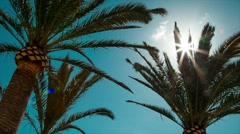 Lens Flare through Palm Tree Leaves at Sunset Time. Stock Footage