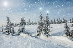 Spruce forest snow snowflakes stars Stock Illustration