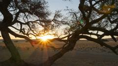 Desert landscape sun going down over horizon Stock Footage