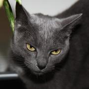A very nice cat - stock photo
