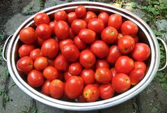 pan of roma tomatoes - stock photo