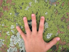 Child's hand on lichen on pink granite rock Stock Photos