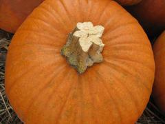orange pumpkin - stock photo