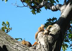 baby squirrles in the nook of a tree - stock photo
