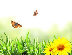 Stock Photo of Green grass and butterflies