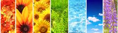Stock Photo of Set of banner with nature elements