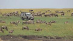 Tourists in safari jeep looking at great migration of wildebeest Stock Footage