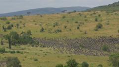 Wildebeest stampede in African Safari Stock Footage