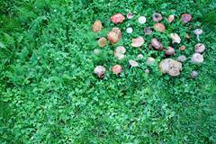 harvested wild mushrooms - stock photo