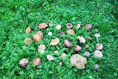 wild mushrooms arranged on green grass - stock photo