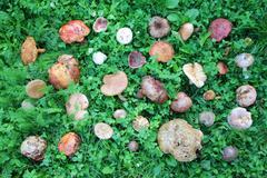 Stock Photo of wild mushrooms