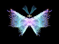 Stock Illustration of Elegance of Butterfly