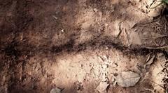 Africa Geba trials of ants baga baga Guinea Bisseau Stock Footage