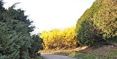Flowering shrubs - stock photo