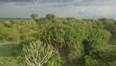AERIAL: Big cactus trees in Africa - stock footage