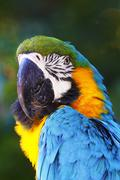 Portrait of a beautiful parrot - stock photo